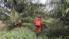 DR Congo workers for Feronia made impotent by pesticides - HRW