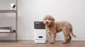 Pets 'go hungry' after smart feeder goes offline